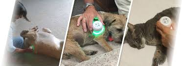 do light therapy ls work lumasoothe light therapy for pets
