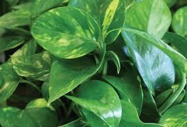 5 easy care houseplants you u0027ll love sloat garden center