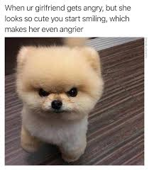 So Cute Meme Face - 34 funny animal memes funny animal memes and animal