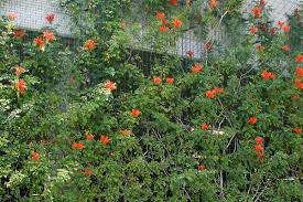 plant gallery greenscreen