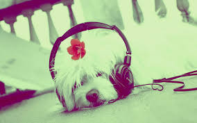 Cute Wall Papers by Download Cute Dog Listening To Music Wallpaper Free Wallpapers