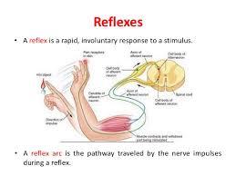 Pain Reflex Pathway Test Of Human Reaction Capacity
