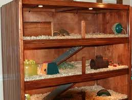 How To Make A Bookshelf Out Of A Pallet Make Your Own Guinea Pig Cage Abyssinian Guinea Pig Tips