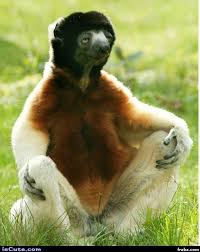 Sloth Meme Generator - meditating sloth meme generator captionator caption generator
