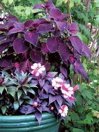 best shade loving plants for containers sunset