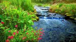 Beautiful Plants by River Cool Green Fresh Good Water Nature Nice Beautiful River