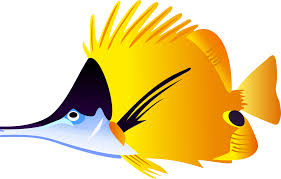 different kinds of fish clipart collection