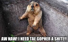 Gopher Meme - aw naw i need tae gopher a shite gopher in a corner quickmeme