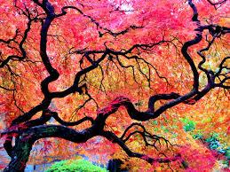 10 beautiful specimen trees to visit now beautifulnow