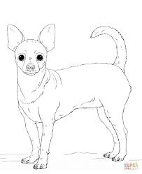ingenious design ideas chihuahua coloring 6 free printable