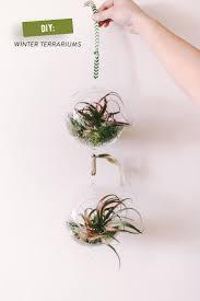 294 best indoor plants images on pinterest indoor plants indoor