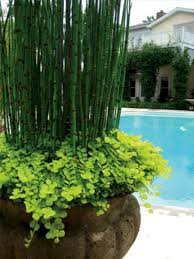 Plant Combination Ideas For Container Gardens My Favorite Plant Combinations 77 House Plants Pinterest