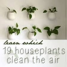 Air Purifying Plants 9 Air by 9 Best Plants For Health501 Images On Pinterest Best Air