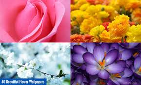 Flowers Com 40 Beautiful Flower Wallpapers For Your Desktop
