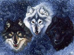 wolf fantasy pics wolves fantasy wallpaper 28046344 fanpop