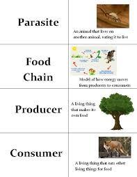 ecology vocabulary worksheet worksheets