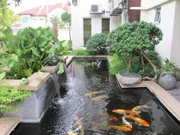 lawn garden backyard small pond design in style home plus palm