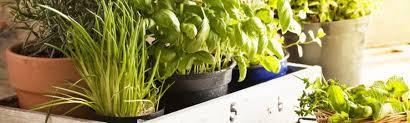 herb herb society of america home