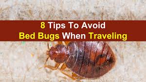 How To Avoid Bed Bugs Bed Bugs When Travel Jpg