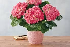 mother u0027s day gift baskets u0026 gift delivery harry u0026 david