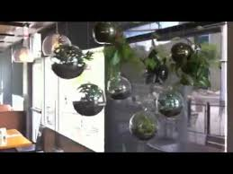 hanging glass globe bubble terrariums modern eco friendly decor