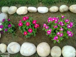 budscape landscape and garden blog india flowers anuuals rainy