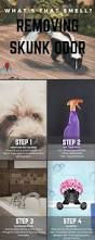 get rid of that skunk smell quick u0026 easy skunk odor removal