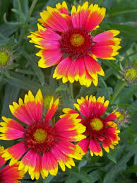 9 best indian blanket images on pinterest blankets beautiful