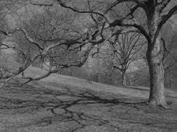 black and white tree at the biltmore estate nc trees photography
