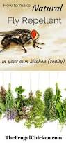 How To Care For Chickens In Your Backyard by 17 Best Images About Spring Chickens On Pinterest Chicken Eggs