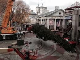 world s largest tallest trees delivery setup