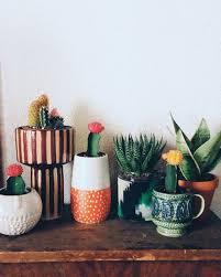 cactus home decor home accessory plants cactus succulents home decor bedroom