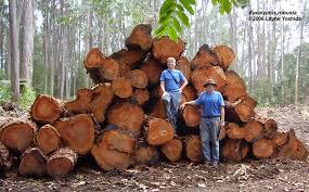 common forest trees of hawaii skolmen