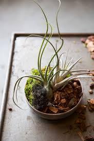 2616 best indoor gardening images on pinterest plants terrarium