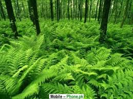 Green Plants Green Plants Nature Wallpapers Mobile Pics