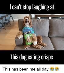 Eating Meme - 25 best memes about dog eating dog eating memes