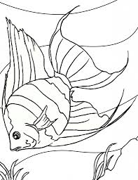 fish drawing for colouring drawing how to draw fish and colour for