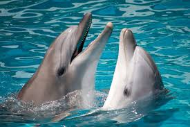 scientists predict ai will allow us to translate dolphin language