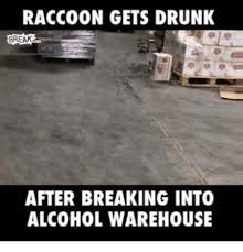 Warehouse Meme - raccoon gets drunk break after breaking into alcohol warehouse