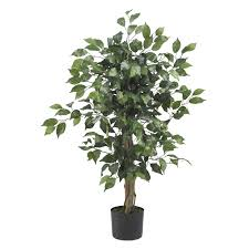 3 foot ficus tree potted ficus ficus tree and silk tree