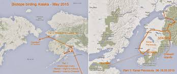 Nome Alaska Map by Biotope Birding Alaska In Spring Homer U0026 Seward