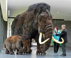 scientists closer recreating woolly mammoth times india