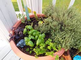 container herb garden a cultivated nest