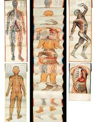 Anatomy Channel File Anatomical Charts Of Channel Acupoints For The New