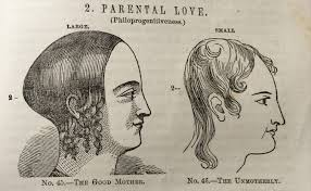 book find phrenology a seemingly silly vintage science with