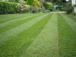 Backyard Grass Ideas Great Ideas For Lawn Design Home Center News
