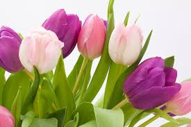 Spring Flower Pictures Free Photo Tulip Spring Flower Bouquet Free Image On Pixabay