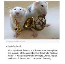 Rat Meme - memes rats wattpad