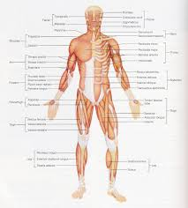 Anatomy And Physiology Nervous System Study Guide Human Nervous System Anatomy And Function Study Guide Human