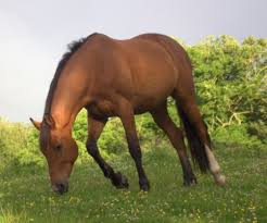 Slaughterhouse Blog by Horse Slaughter Missouri Slaughterhouse Awaits State U0027s Decision